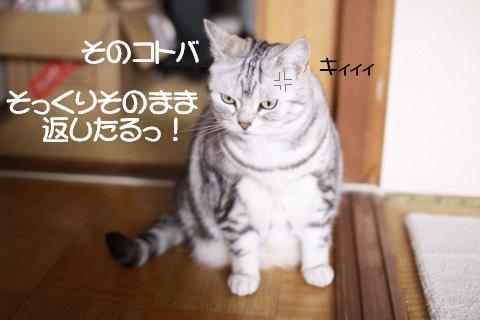 Img_6261_2