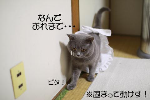 Img_6736_2