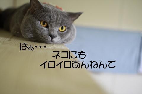 Img_79441