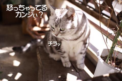 Img_1247_2